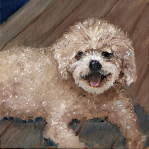 Oil portrait of small white dog, 5 by 7 oil on canvas